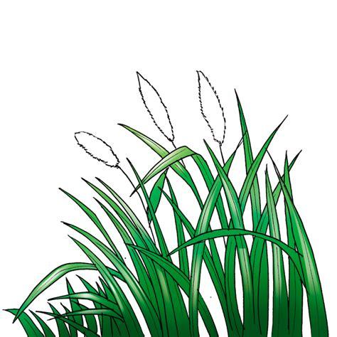 Bola Rumput Gantung Bola Rumput Hiasan Bola Rumput Dekor 1 macam macam rumput liar hias dilengkapi gambar rumput hd