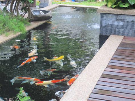 desain gambar ikan budidaya ikan koi di kolam sekaligus sebagai tema desain