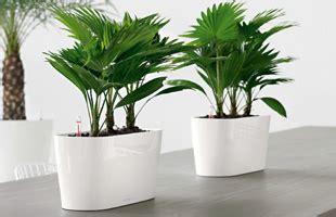 indoor plants nz the urban garden auckland s indoor plant hire specialists