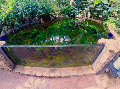 aquarium pond design 20 best images about tetrascape designs on pinterest