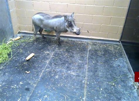 fotos animales zoo barcelona paso tras paso huella tras huella sotanos del zoo de