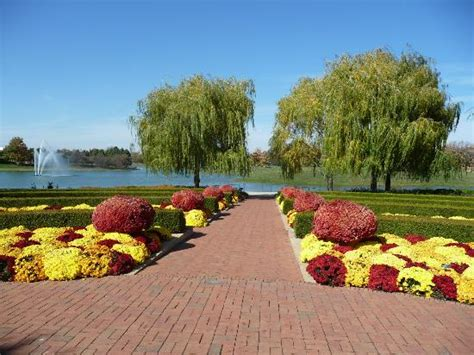 Swans And Other Waterfowl In The Lakes Picture Of Botanical Gardens Chicago Hours
