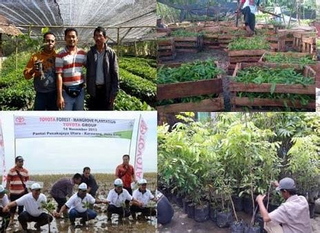 Jual Bibit Rambutan Di Makassar jual bibit dan grosir bibit unggul murah jual