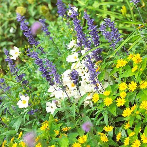 Gardenia Annual Or Perennial Top Annual Plant Pairings Shrubs Annual Plants And Plants