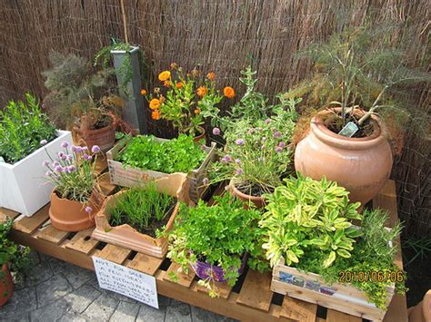 Potted Herb Garden Ideas Container Herb Garden Design Herb Garden Design