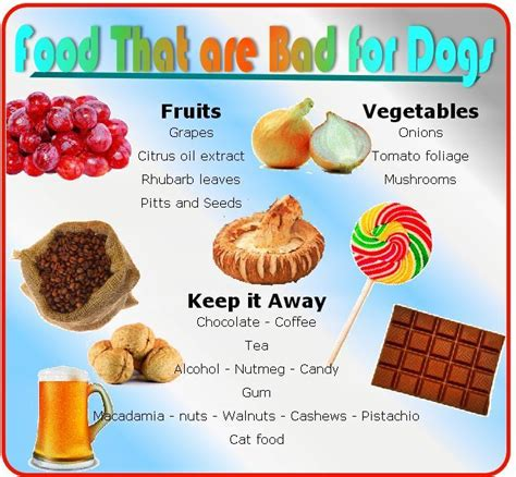 food bad for dogs food that are bad for dogs food guide animals tips