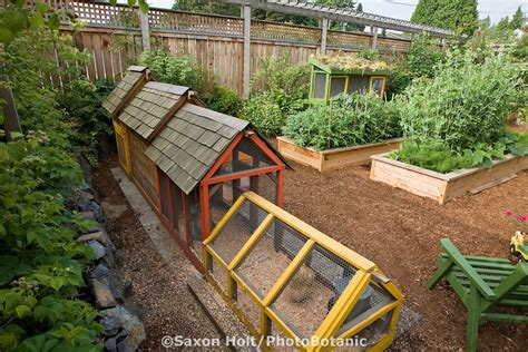 Backyard Organic Farming by Chicken Coop In Back Of Small Space Backyard Organic