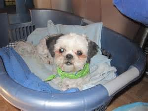 Small Dogs Needing A Home Small Breed Family Dogs Breeds Picture