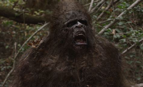 the of bigfoot bigfoot evidence the bigfoot creature from this new