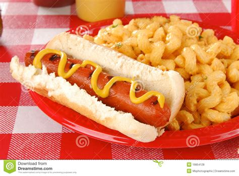 dogs and mac and cheese and macaroni and cheese stock photo image 19854128