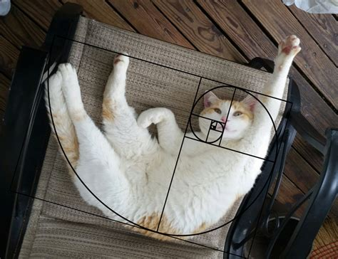 furbonacci sequence proves that cats are purrfect 10