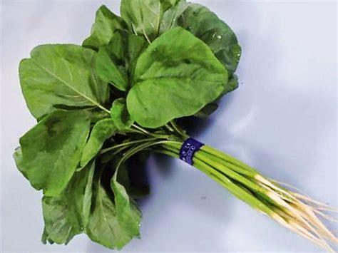 10 manfaat daun bayam bagi kesehatan tubuh manfaat daun obat