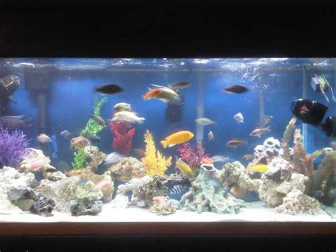 cichlidscom tank examples reefs  gallon malawi