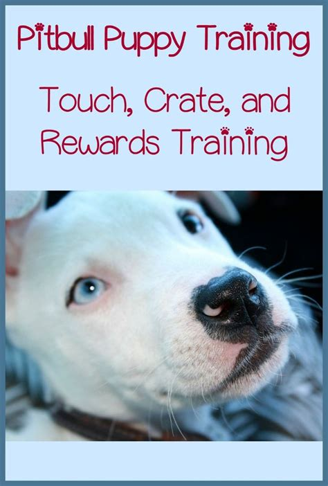 T Shirt Trainer Pittbull C pitbull puppy tips touch crate and rewards