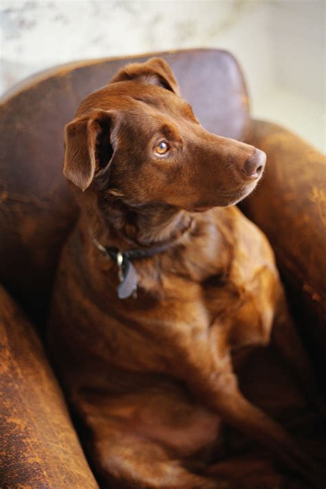 dogs with anxiety separation anxiety cures help for with separation anxiety