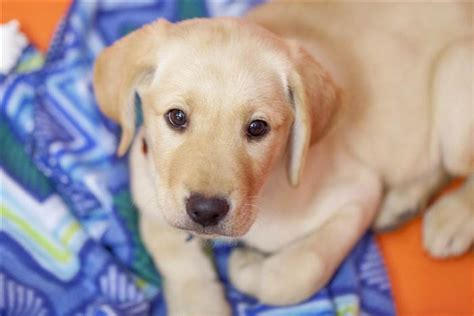 puppy pictures everything you need to about wrangler today s puppy