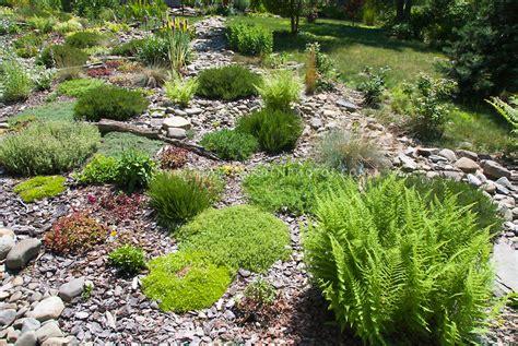 plants  rock gardens full sun hawk haven