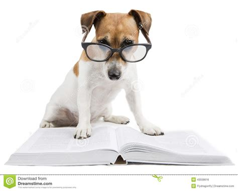 puppy studying smart reading book stock photo image 43558616