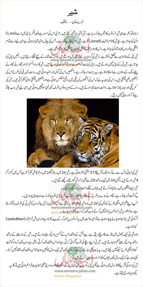 Aloe Vera Facts Lion Details In Urdu For Kids Lions Facts For Kids