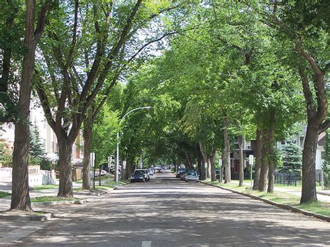 trees denver denver trees add along with potential problems