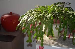 cactus de no 235 l jacky la verte