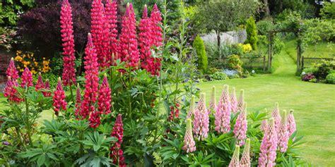 photos of flower gardens garden flowers stock photos garden flowers