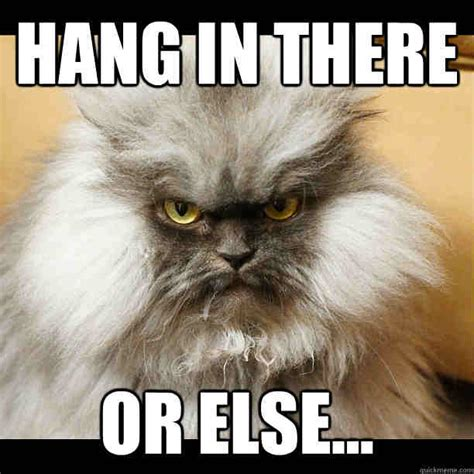 Hang In There Cat Meme - 20 hang in there meme to motivate you sayingimages com