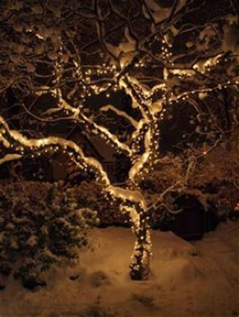 how to put lights on shrubs plants that look great in lights