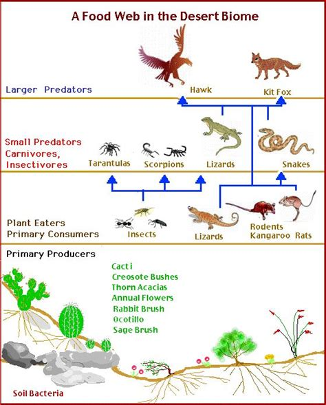 food webs on pinterest food chains science and food 161 best food chains webs ecosystems and biomes images