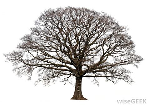 Trees That Shed Their Leaves In Winter by Why Do Some Trees Lose Their Leaves With Pictures