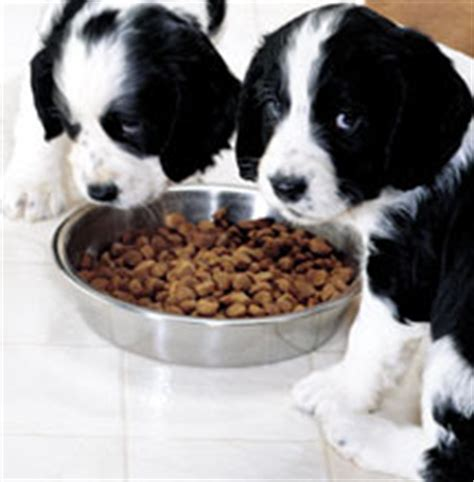 deworming puppies what to expect puppy care what to expect the week with a new puppy