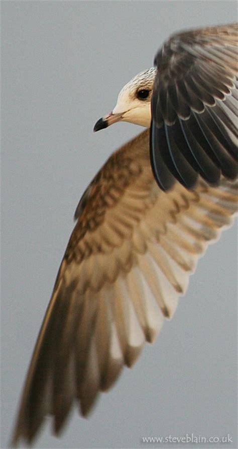 Serbuk Flocking Blue 676 676 best seagulls and other birds images on