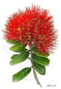 17 best images about pohutukawa flower art on pinterest