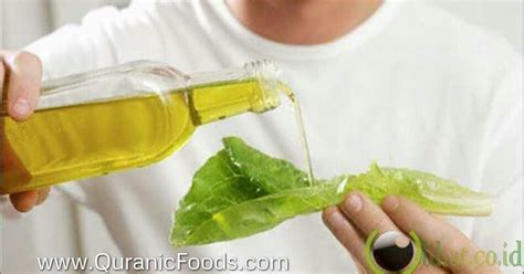 amal   makan minyak zaitun olive oil asli
