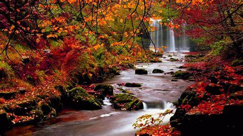 beautiful fall 4k hd desktop calm brook 4k fall wallpaper