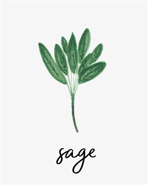 free printable herb poster free printable herb print collection within the grove