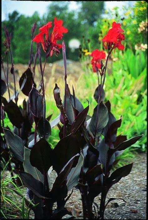 112 best black deep purple flowers foliage images on pinterest purple flowers deep purple