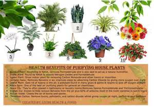 Benefits Of Houseplants by 10 Purifying House Plants And Their Health Benefits Urbanfig
