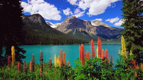 Flower Mountain wallpaper mountain flower of nature