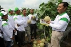 Bibit Terong Tahan Virus ewindo pameran nasional perkenalkan benih unggul baru