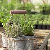 Cultiver Des Plantes Aromatiques by Cultiver Des Plantes Aromatiques En Pot Ooreka