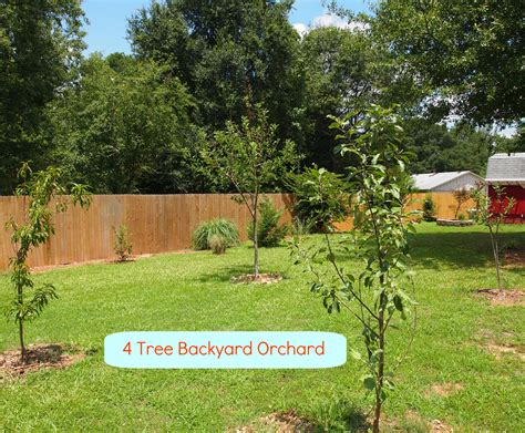 layout home orchard an orchard big or small is a lovely idea a cultivated nest