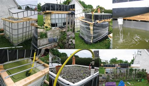 home aquaculture backyard fish farming benefits of diy aquaponics