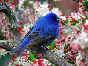 bird bird bird bird encyclopedia of world photo