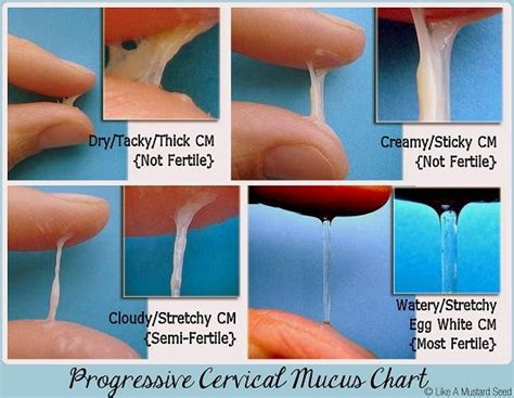 cervical mucus on trying to conceive