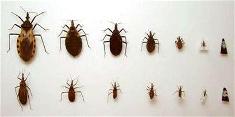 imagenes de vectores biologicos enfermedad de chagas mal de chagas technical