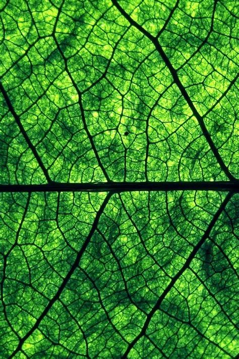 patterns in nature leaves fractals veins of leaves and roots branches blood