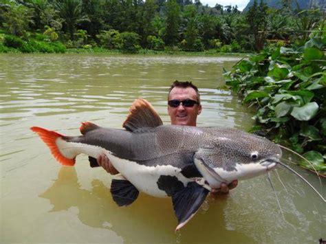 amazon fish amazon fish bing images