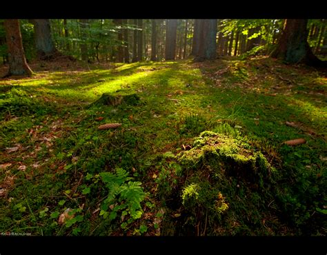 forest floor by keldbach on deviantart