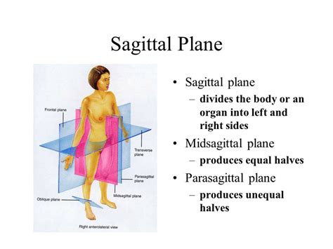 describe a parasagittal plane of section clinical terminology based on a greek or latin root word